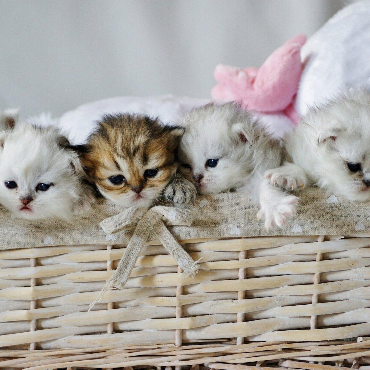 этой мини фотки котят пригласила