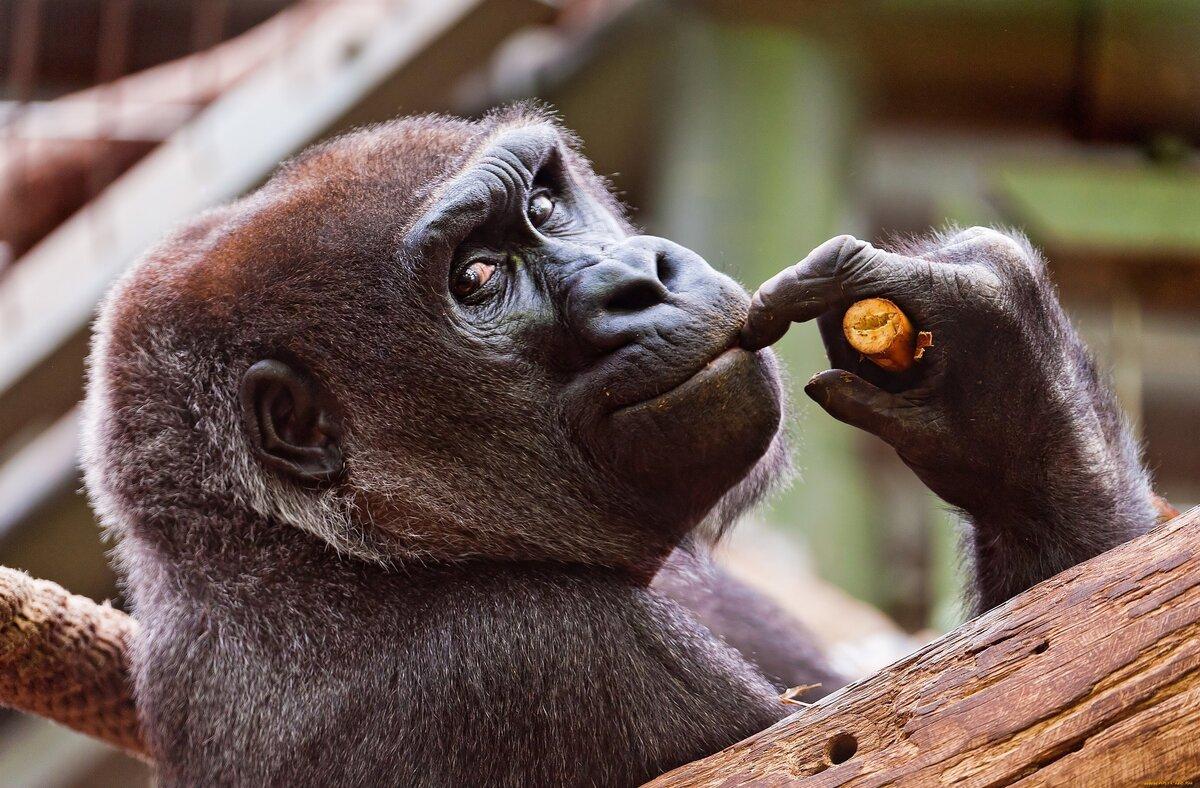 Смешные фото и картинки животных, картинки