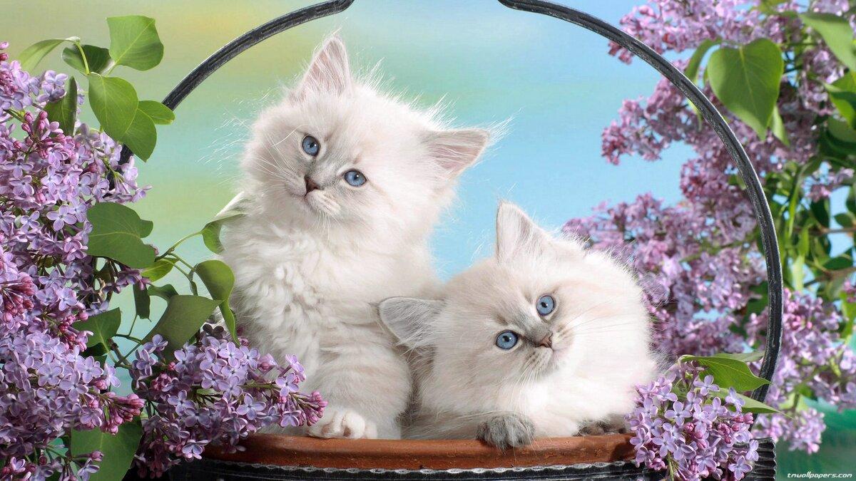 ними всегда картинки котята обои для рабочего стола труда этих