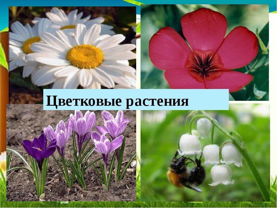 джонсон все картинки и название цветковые расскажем