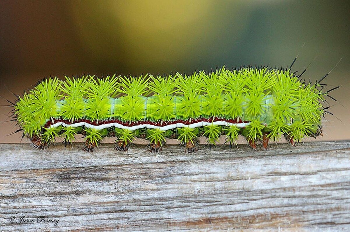 Открытки, гусеницы картинки красивые