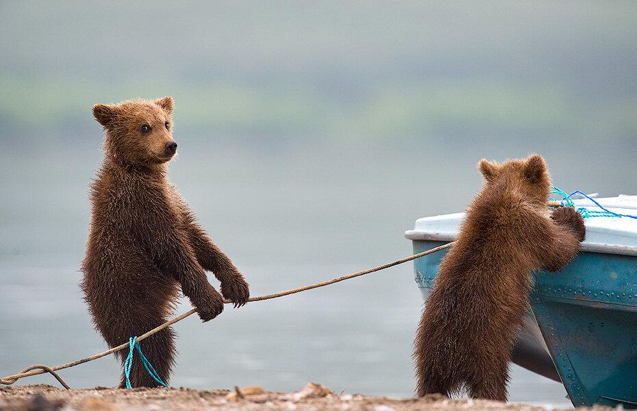 Картинки про медвежат смешные, открытка для денег