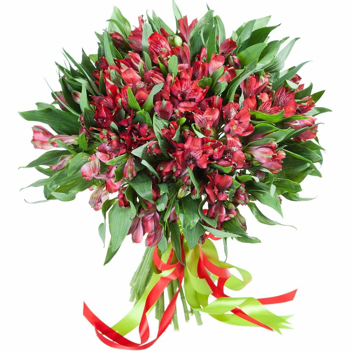 Цветок альстромерия где купить, букеты