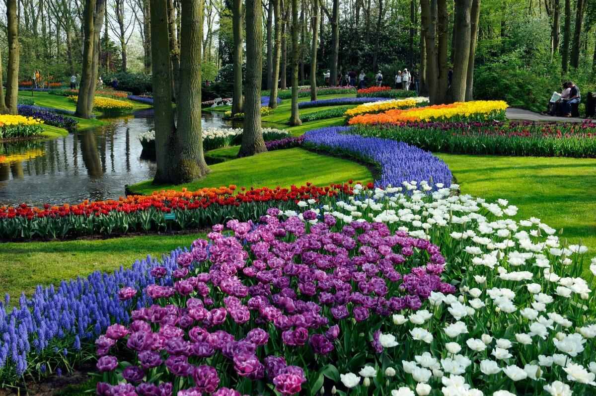 Картинки самых красивых цветов мира, день рождения одноклассника