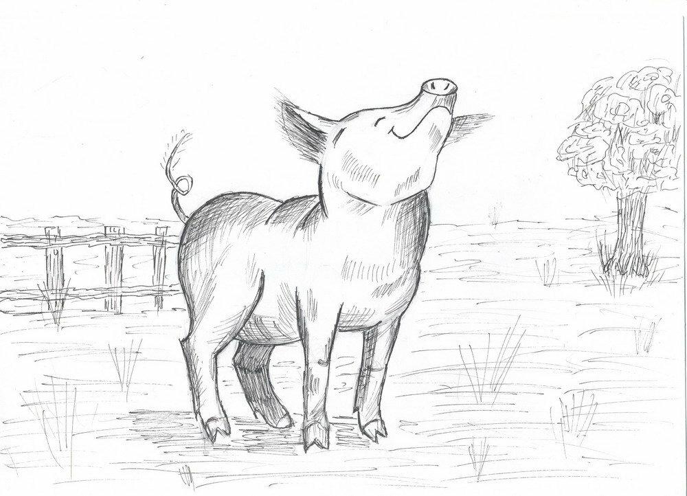 Чего, рисунки свиньи прикольные карандашом поэтапно