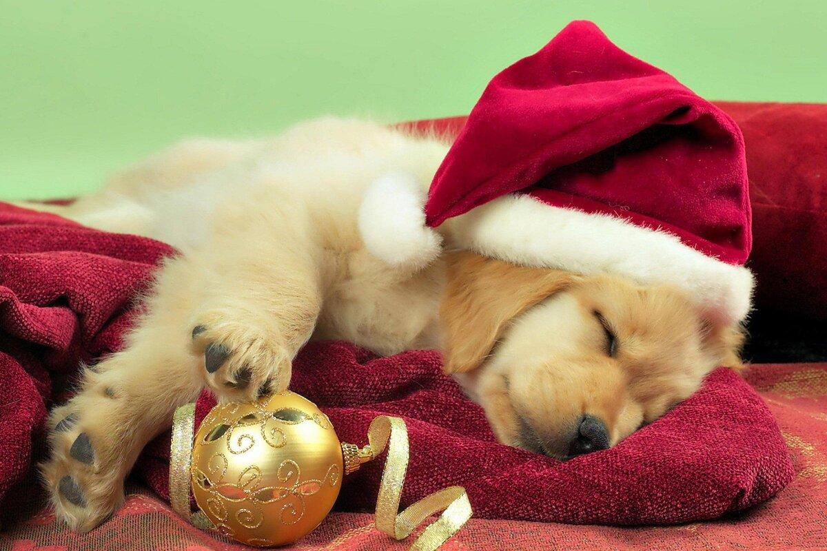 Любимой, смешные картинки животных с новым годом
