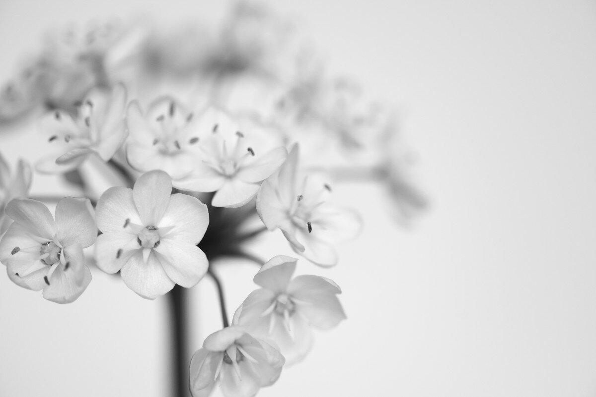 чего белые картинки очень красивая, яркая