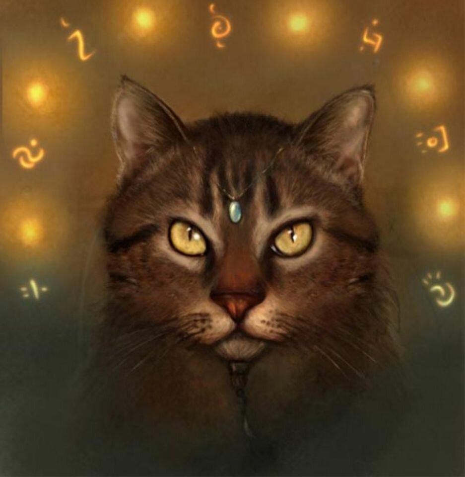 Картинки котов прикольные магов