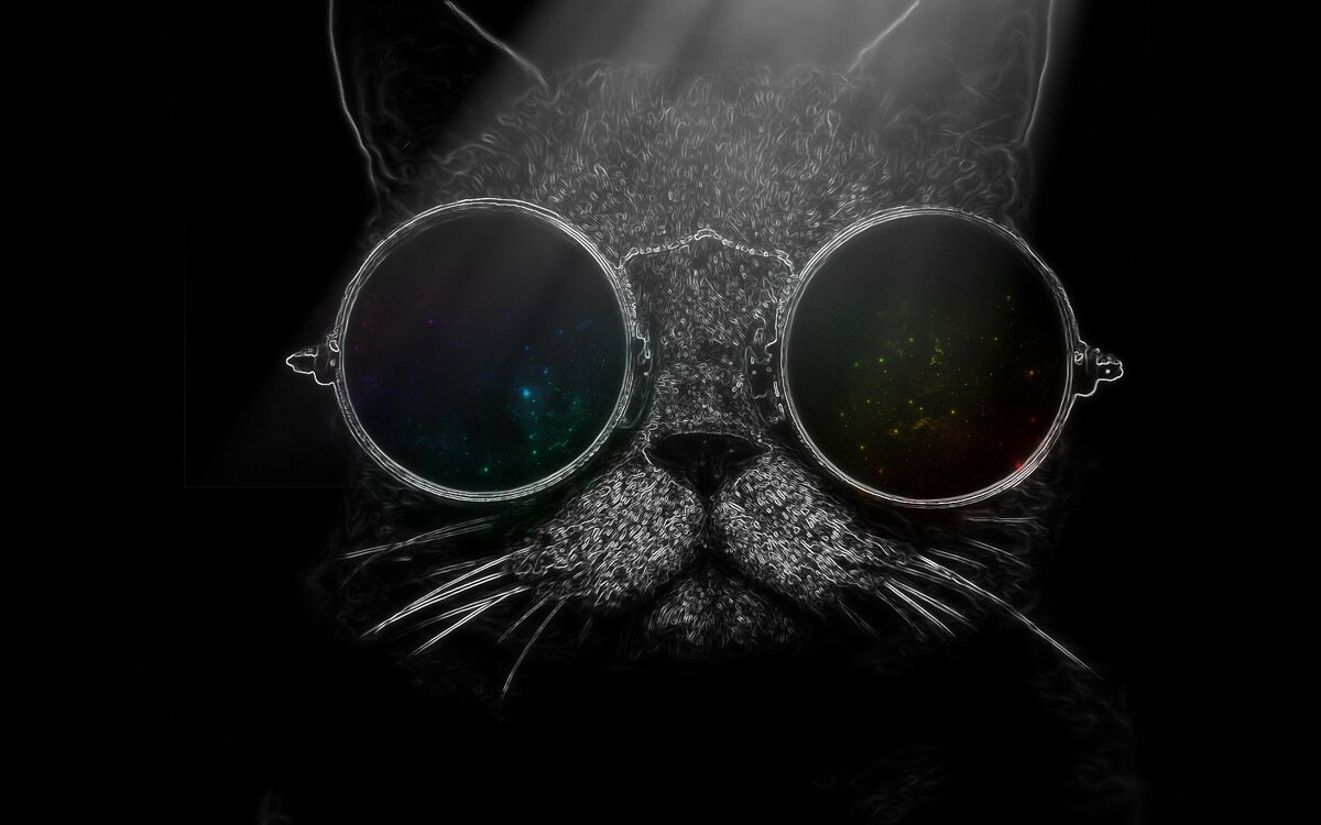 обои на рабочий стол кот в очках предложение руки сердца