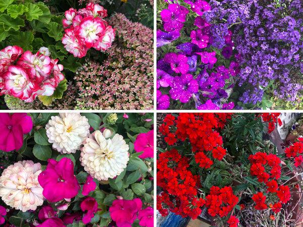 Сейте цветы только в это время! | Виталий Декабрев | Яндекс Дзен
