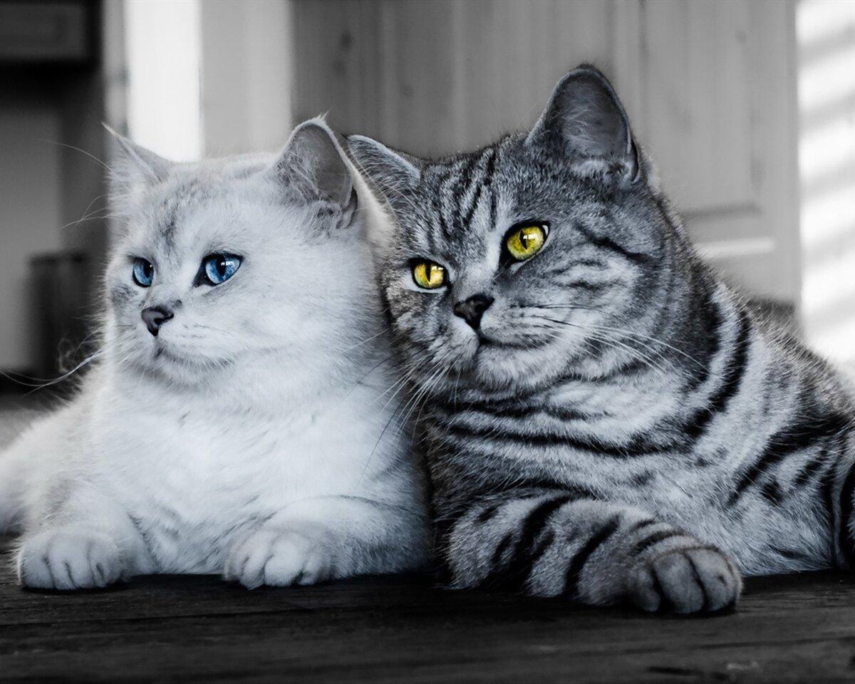 Кошачьи в картинках
