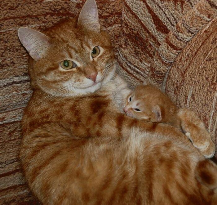 Смешные фото с кошками с надписями, открытка