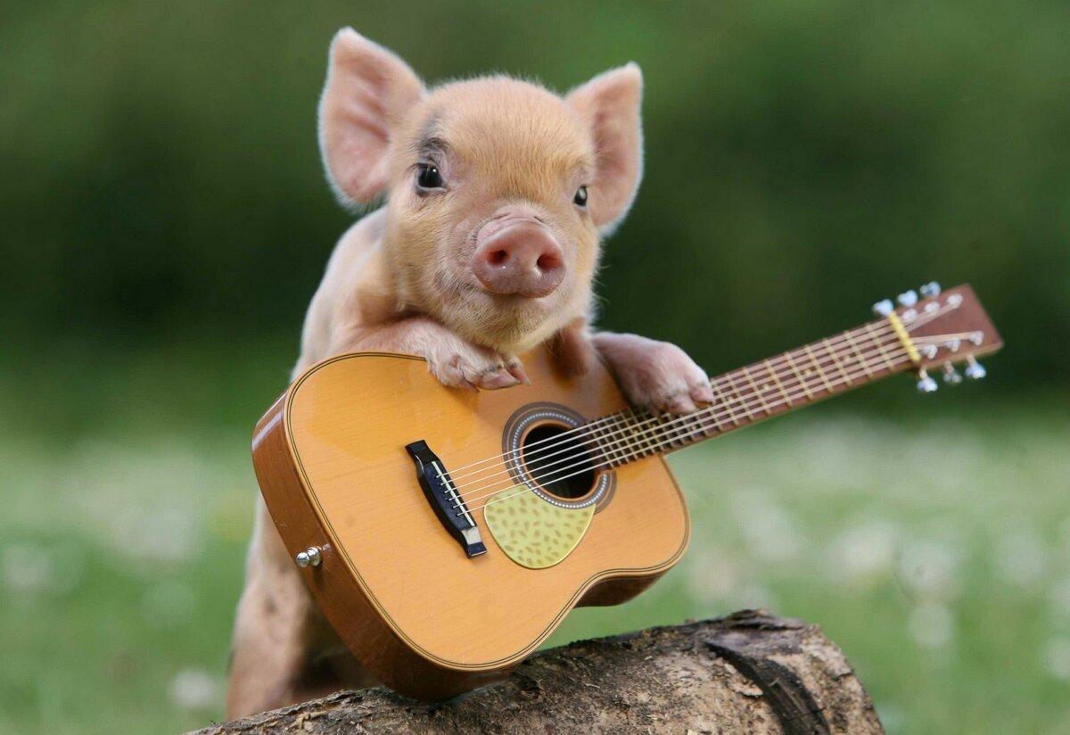 Картинки с гитарами приколы
