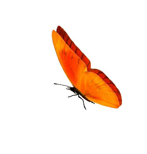 Анимация бабочка картинки