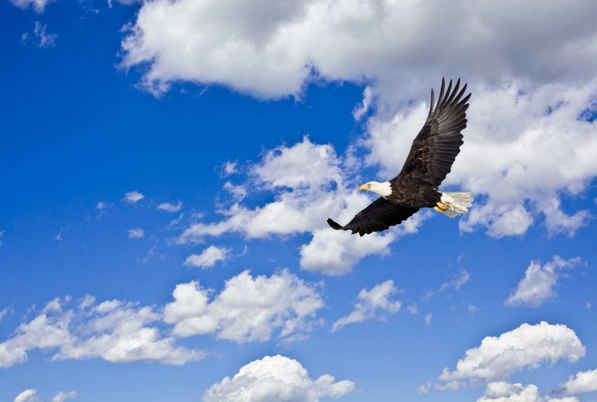 Орел в небе открытка