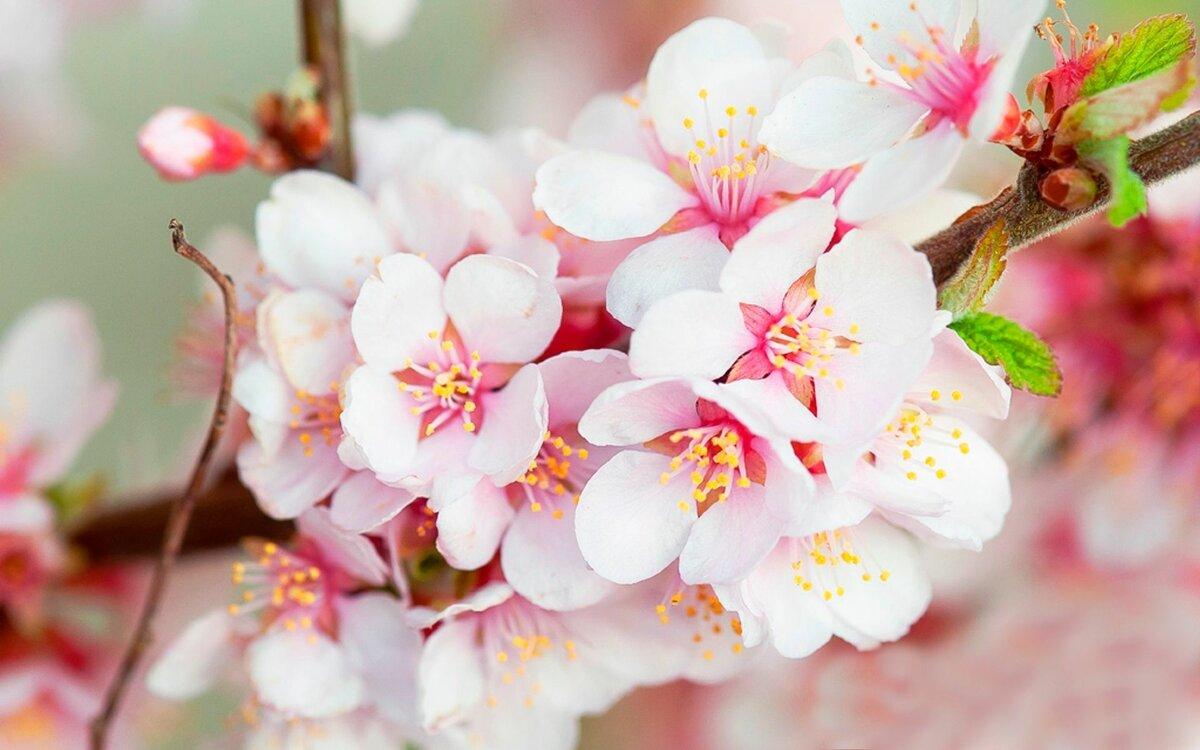 Картинки на телефон прикольные красивые для весны, про женщин