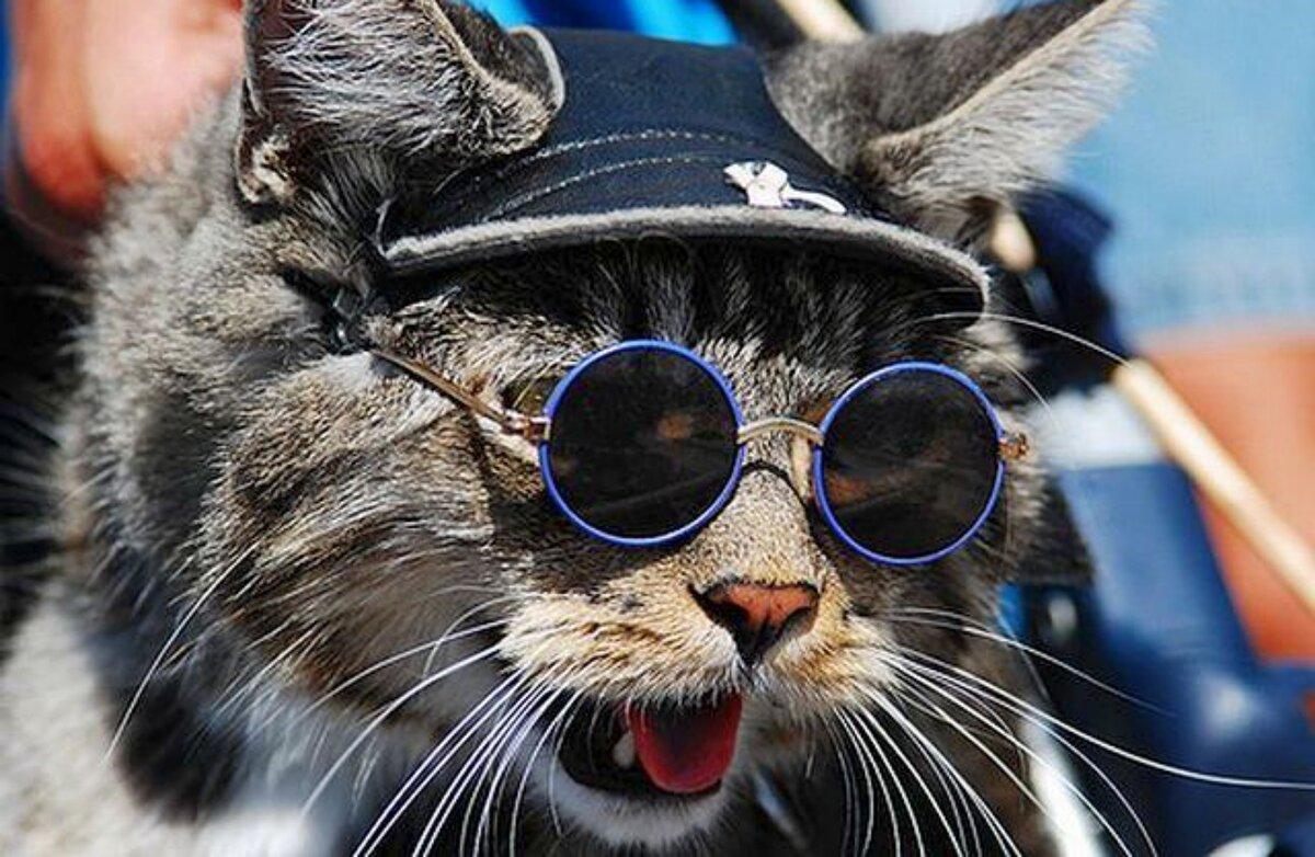 Картинки, картинки котяра в очках