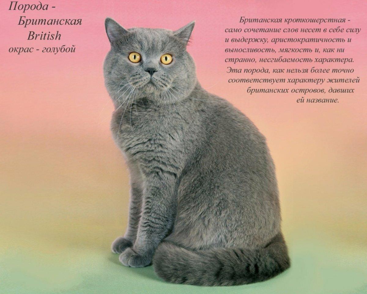 Породы кошек описание картинки