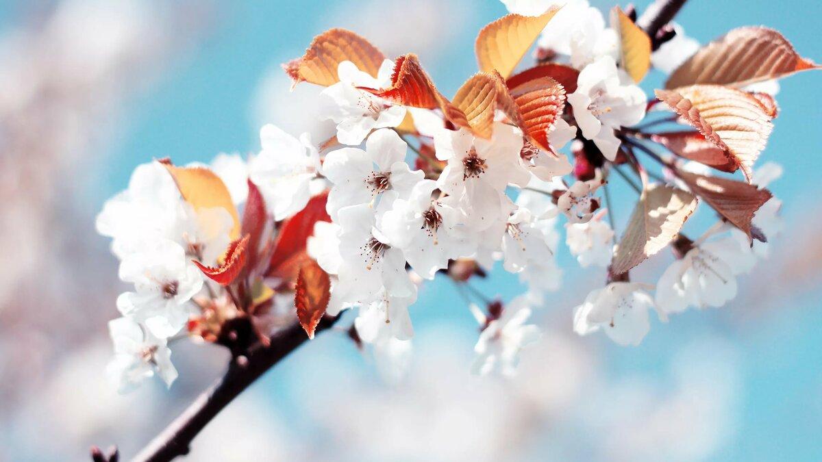 Для, картинки про весну на рабочий стол красивые