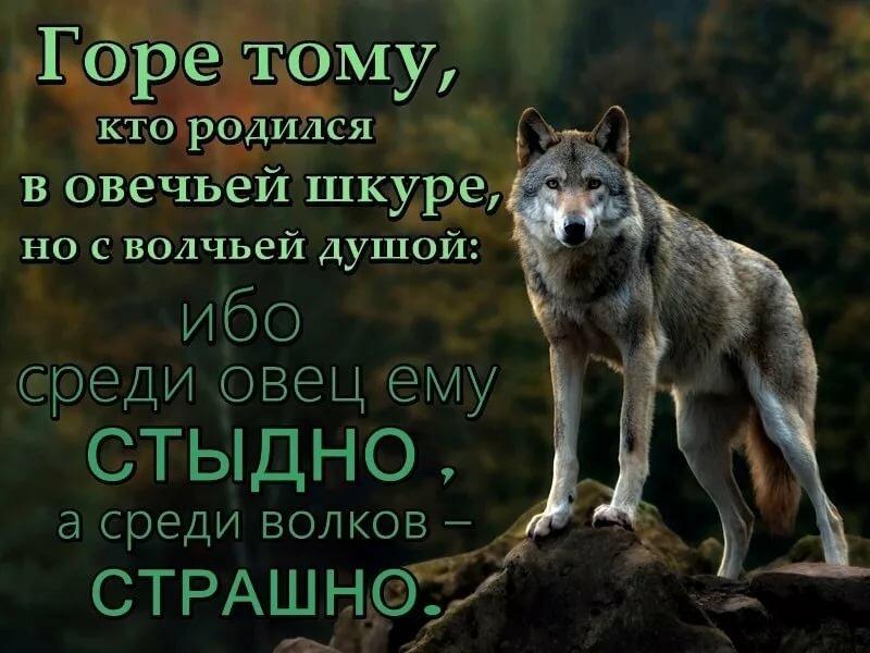 Волки картинки с собаками с надписями