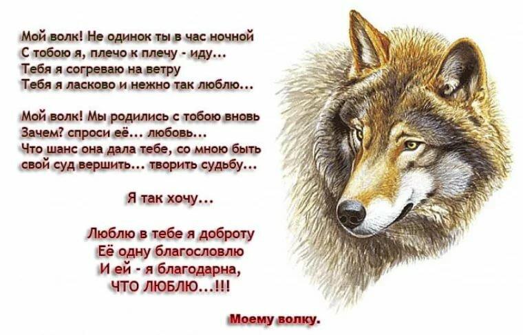 способна превратиться одинокий волк стихи картинка купить