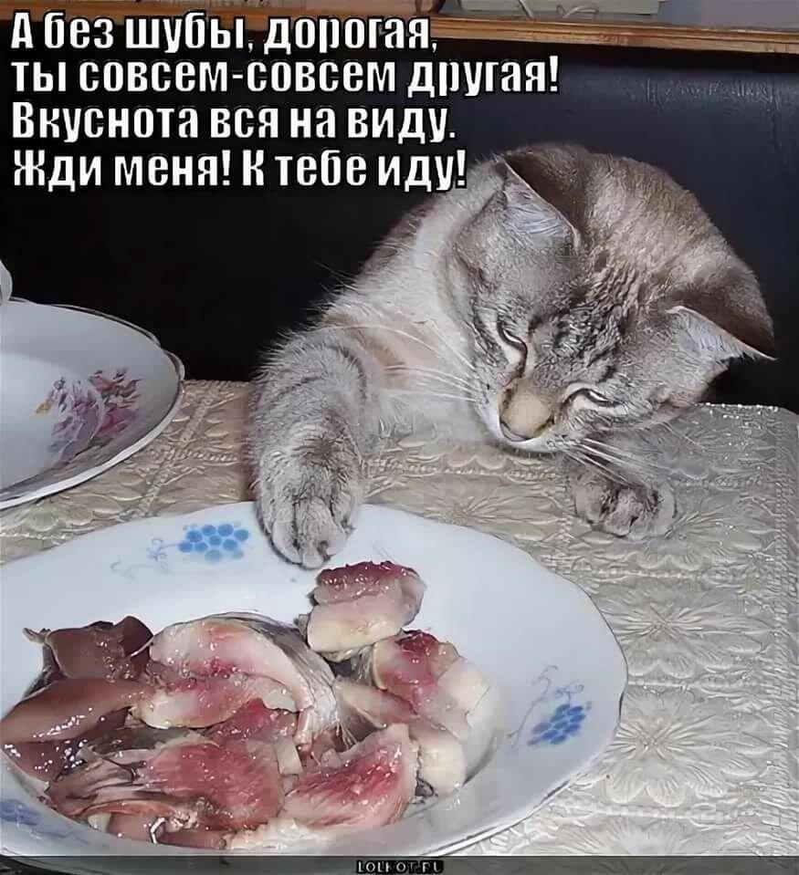 Картинки веселые кот ворует рыбу, пожелания счастья