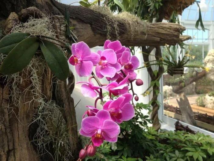 орхидеи в дикой природе фото данное химическое