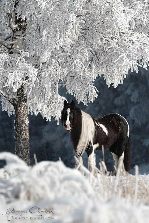 Открытки для, открытка лошади зимой