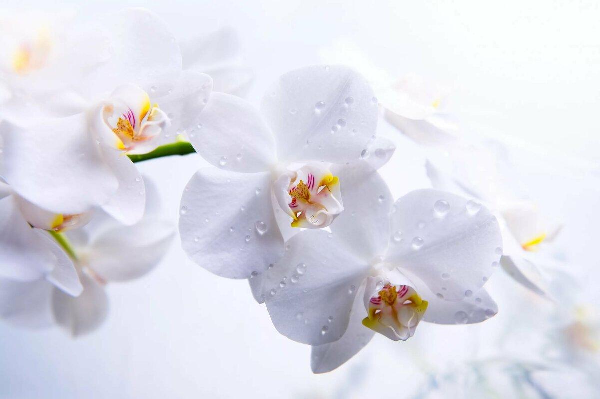 День, красивые картинки цветы в хорошем качестве