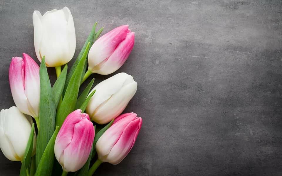 Желаю море, картинки тюльпанов