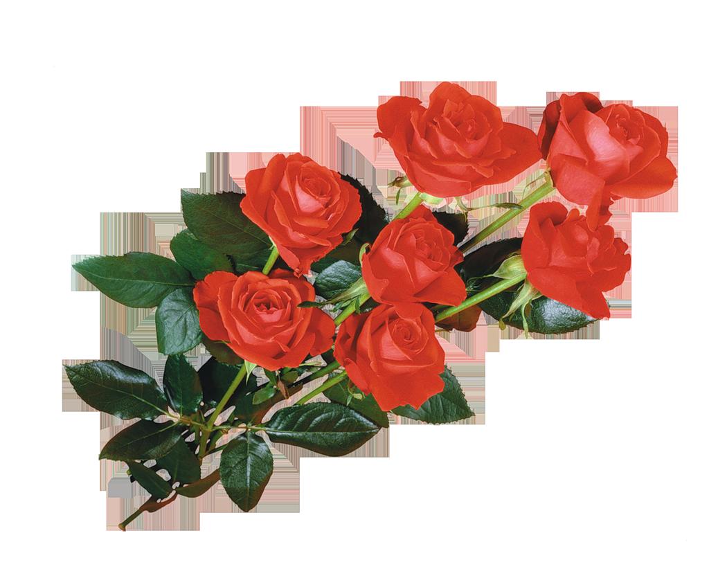 Прозрачные анимационные картинки красные розы