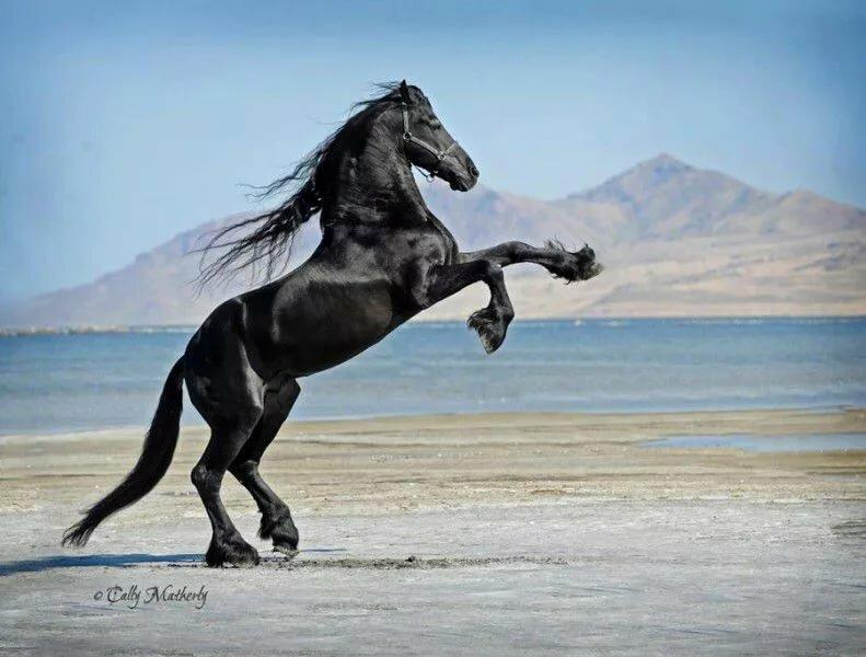 Картинки с лошадьми на дыбах