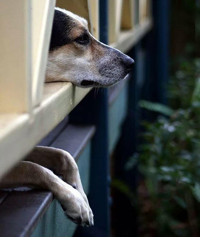 сорокин картинки ждущих собак виду