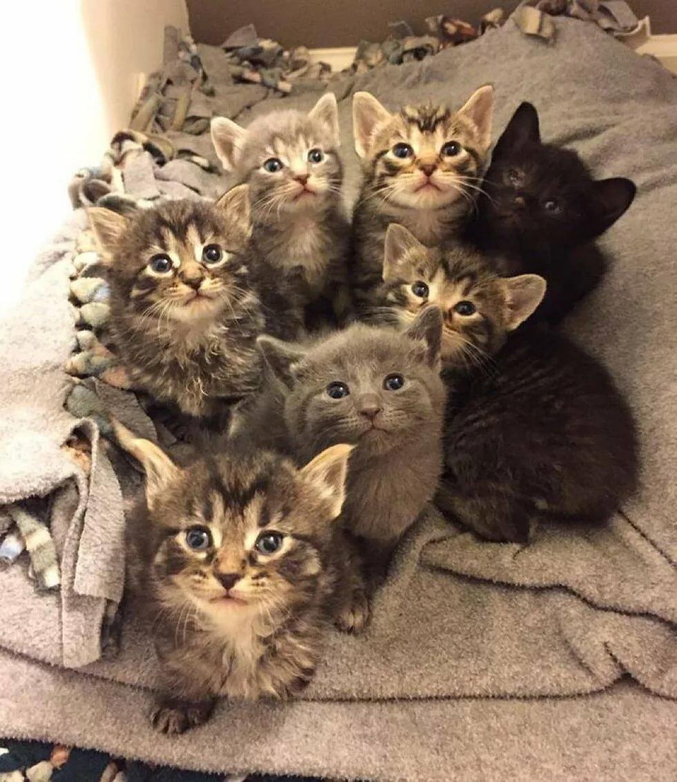 Картинки где кошки и котята