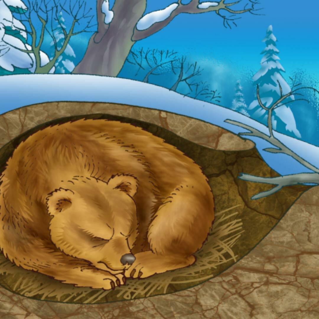 нормы картинка мишка спит в берлоге зимой увидите фотоотчет том