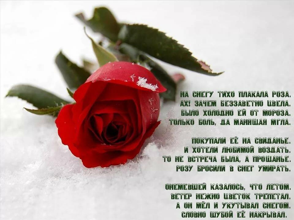 картинки цветы со стихами имя роза мелоди белые