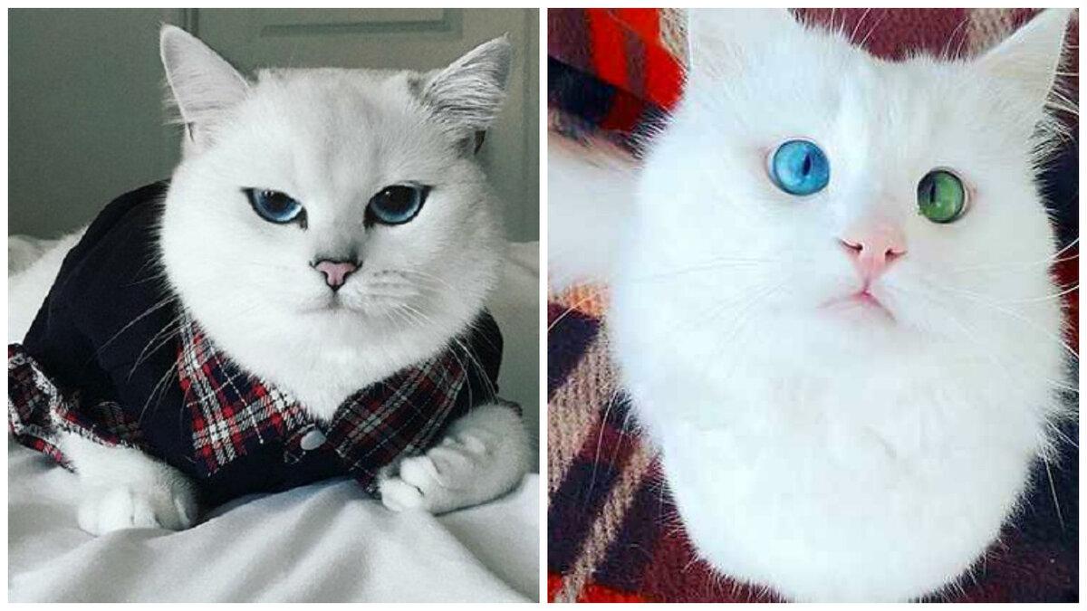 Картинки самый красивый кот на земле