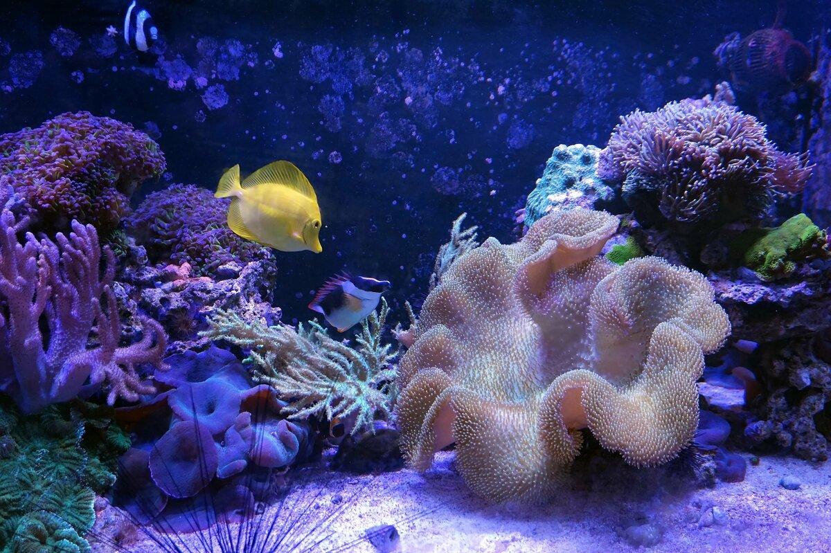 Красота подводный мир картинки результате обработки