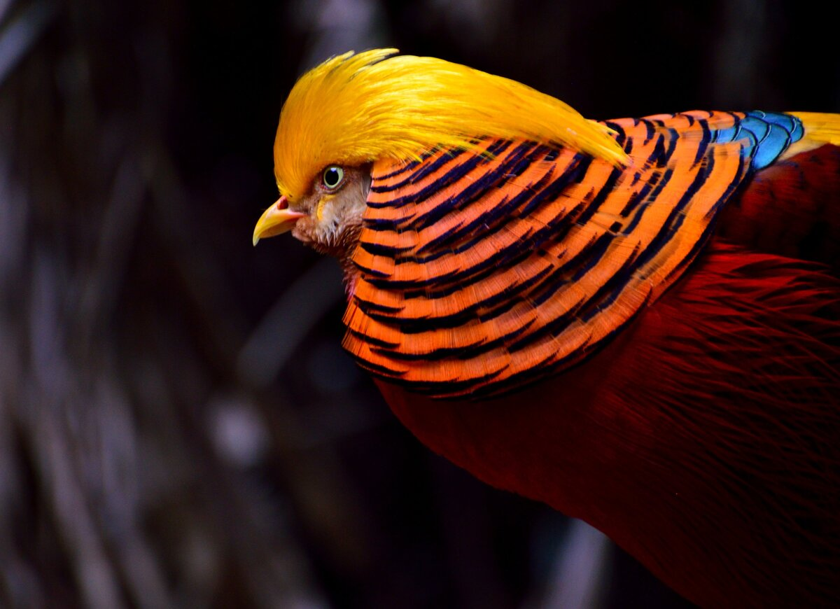 Мой мир фото птиц