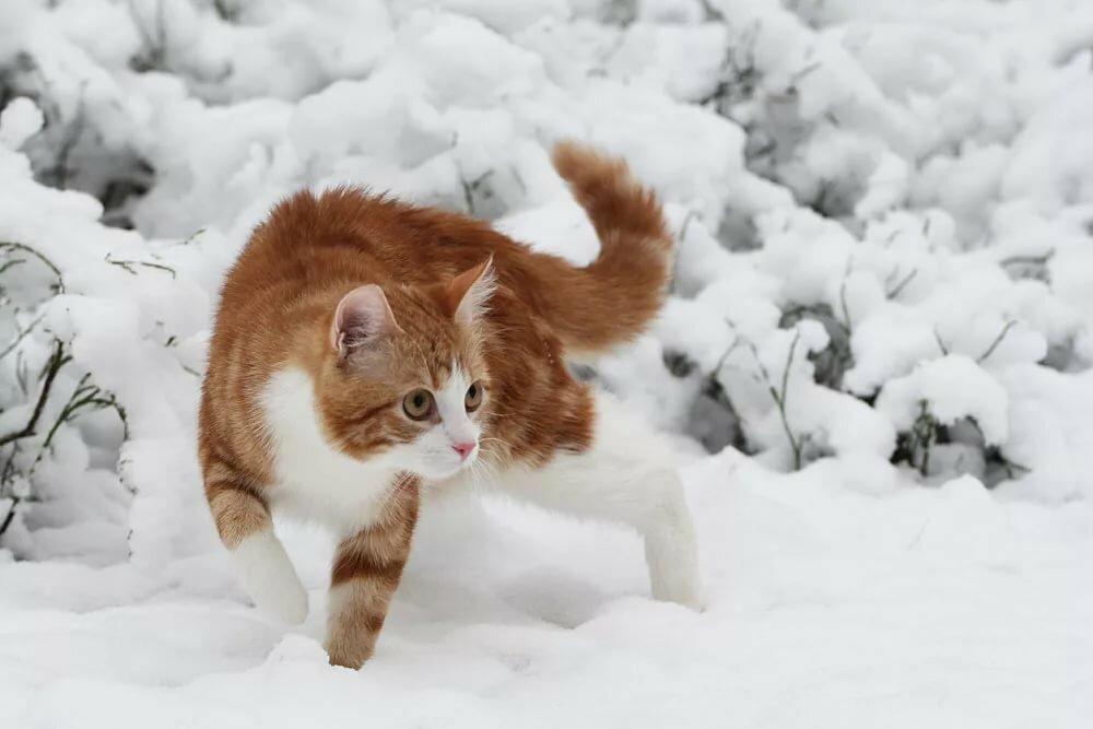 его готовили картинки кошек зимние предлагаем вам обзор