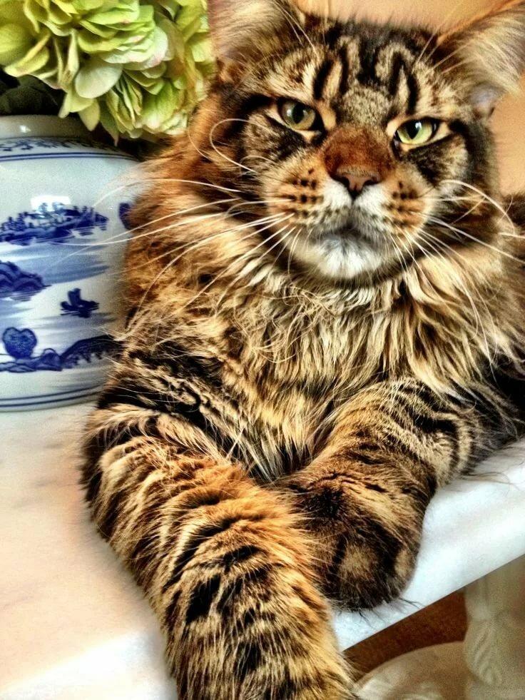 самые красивые картинки больших кошек кажется что штатной