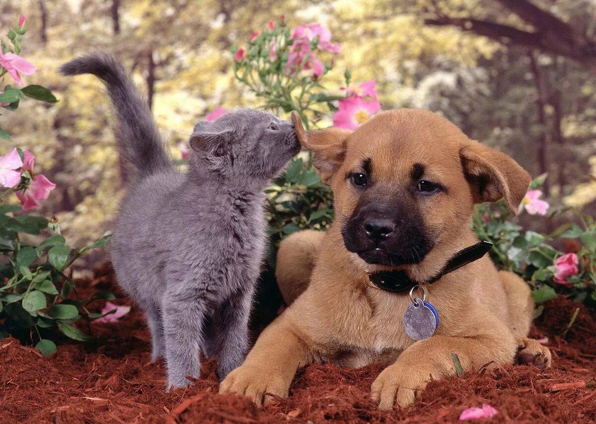 Новым годом, картинки с кошечками и собачками