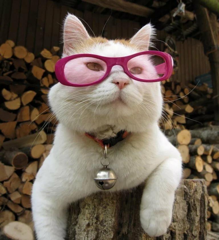 пафосные коты в очках светлее