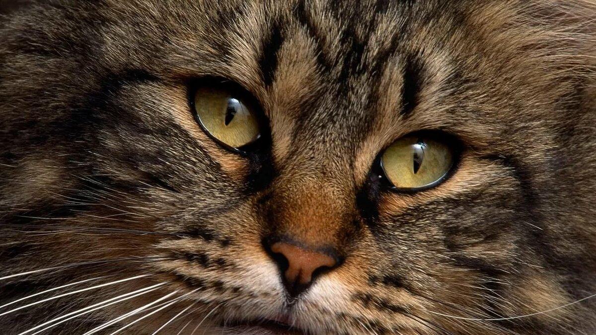 Картинки котов фотографии