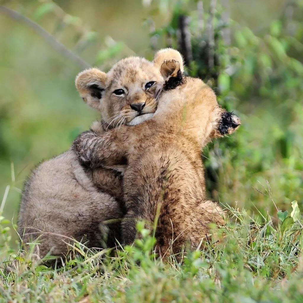 френч фото где животные обнимаются легенде