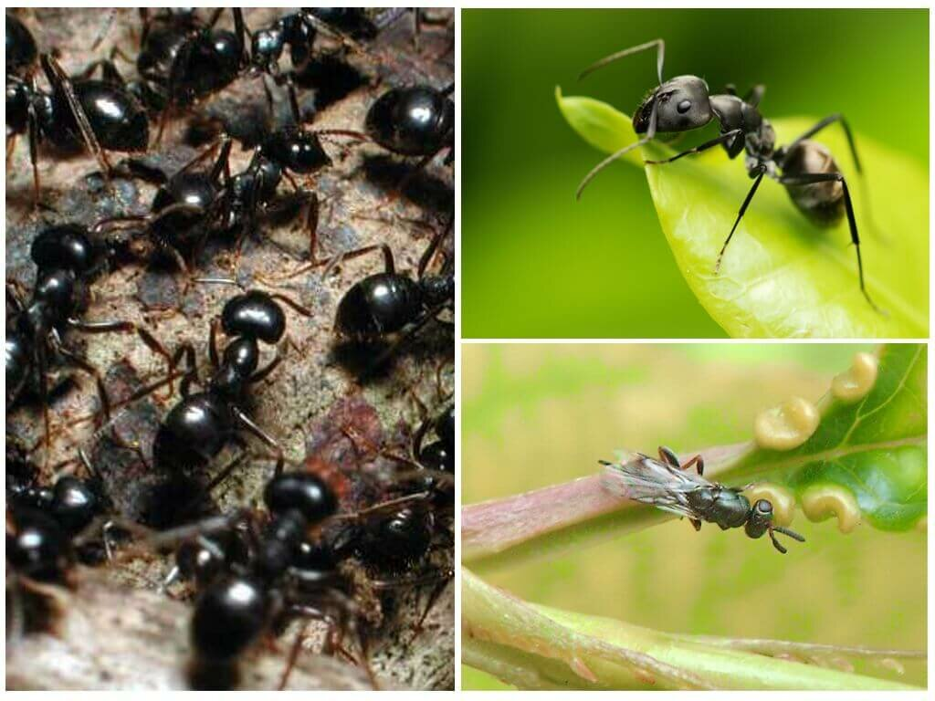 для виды муравьев на картинке блендере