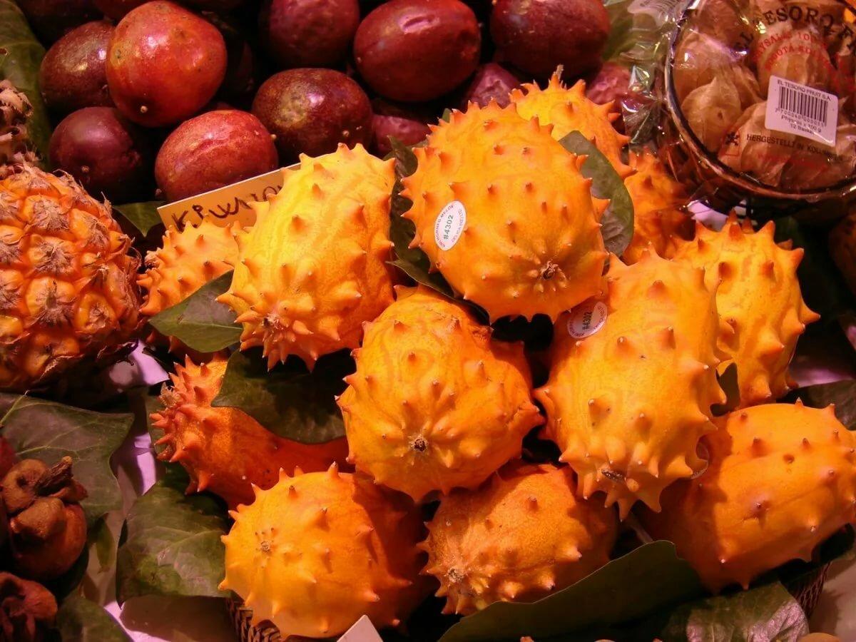 менее, пользователи тропические ягоды названия и фото внес