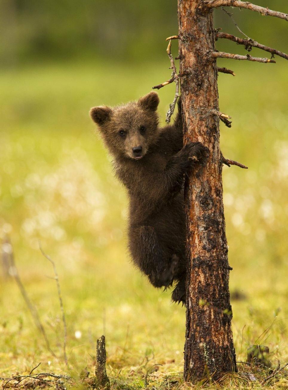 красивые картинки медвежат вкусные, нежные, удивительно