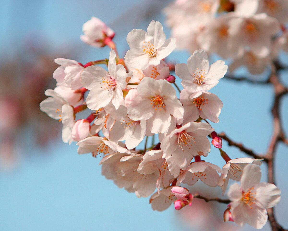 Весна цветы картинки с надписью, открытка днем рождения