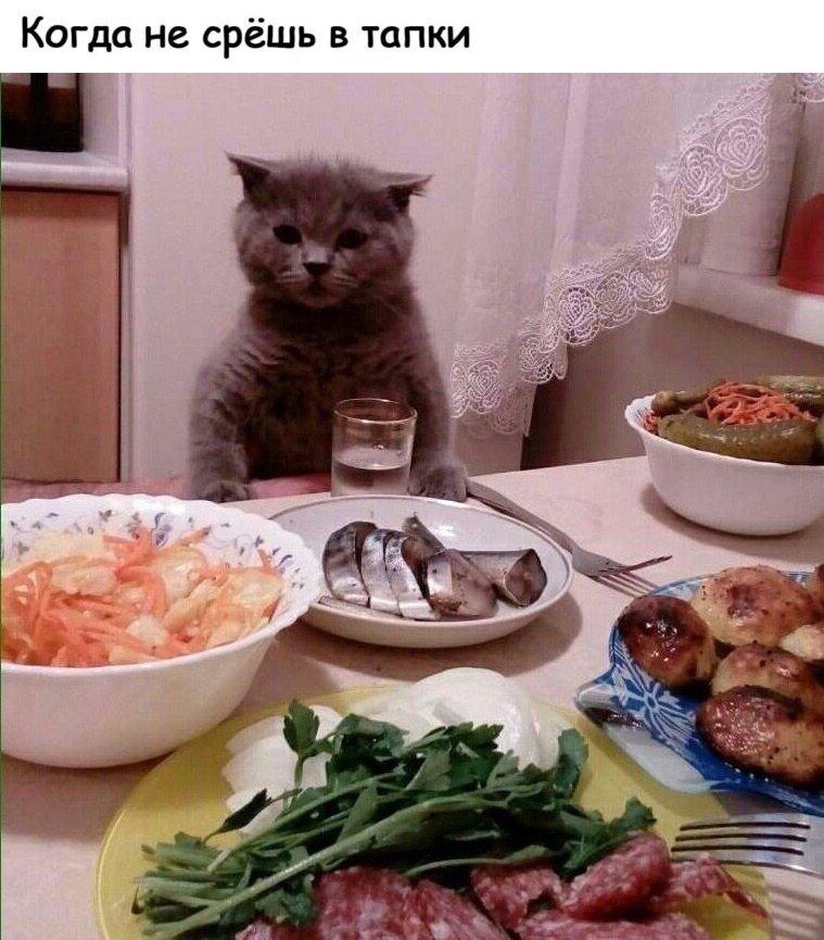 Вкусного обеда картинки с надписями прикольные хорошее настроение